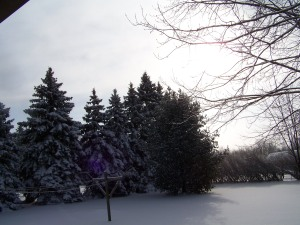 Back Yard in Winter